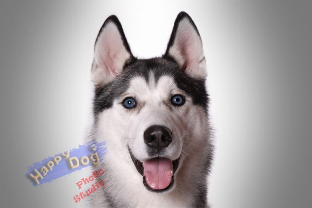 Happy Dog Grooming, 416-297-5044, 1350 Ellesmere Rd ... - photo#4