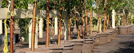 Tree Planting Sawyer's Trees & Landscape